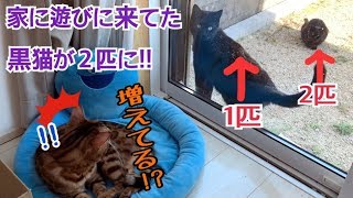 ふと見ると黒猫が2匹に増えていて驚きました。 Instagram→http://instagram.com/tamaki0916 Twitter→http://twitter.com/Tama27u0916.