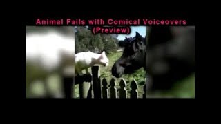 """""""Funny Business"""" Animal Fails with Comical Voice overs"""