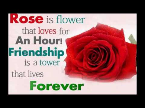 Red Rose Quotes