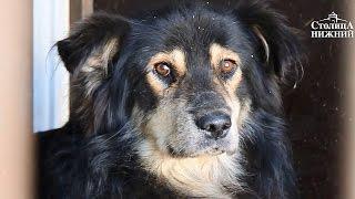 Бездомных собак в Нижнем Новгороде после отлова и вакцинации будут возвращать в среду обитания