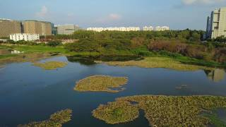 Saul Kere Lake || Lakes Of Bangalore || DJI Mavic || Aerial Shots