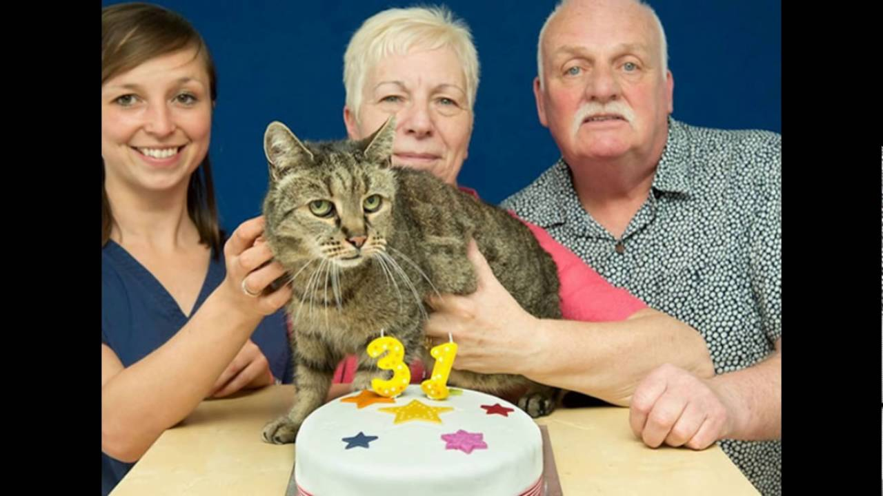 This 31 Year Old Cat Is Probably The Oldest In World Yet Still Has Many Lives Left