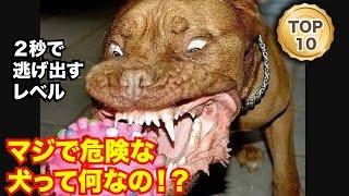 人間と馴染みのある動物といえば犬があげられますが、 元々凶暴な性格の...