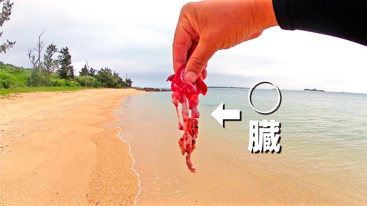 魚の内臓をビーチに仕掛けて夜まで待った結果…