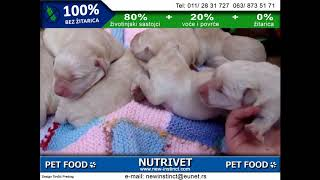 Funny dogs & NUTRIVET zdrava hrana za pse i mačke (14)