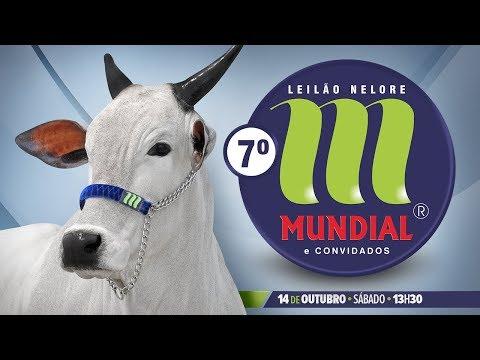 Taiala da Mundial - MUN 2316
