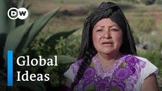 Mexiko: Agaven für den Tourismus | Global Ideas