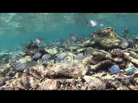 Florida Keys Snorkeling (Key West vs Key Largo)