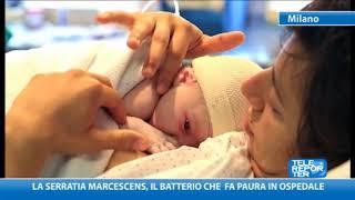 La Serratia marcescens, il batterio che fa paura in ospedale
