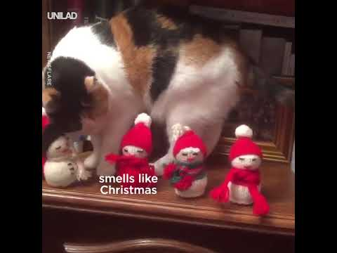 Naughty Cat Pushes Christmas Toys Off Shelf