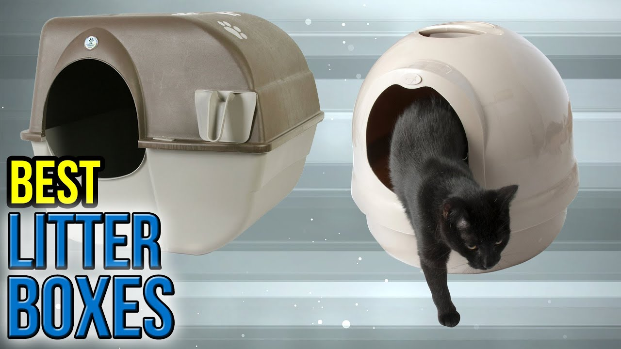 10 Best Litter Boxes 2017 YouTube