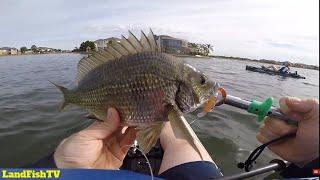 Cheap lure SMASHING the Bream fishing (60ish fish caught)
