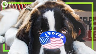 What if you were required to vote on election day?