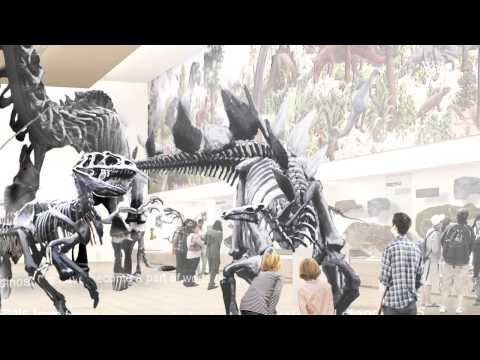 Renovating the Great Hall of Dinosaurs