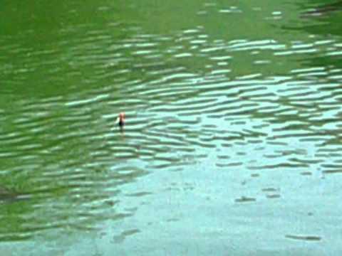touche étang truite