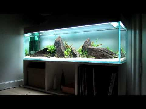 Aquascape lowtech