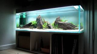 Aquascape lowtech