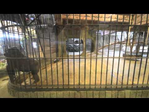 Pata Zoo in Bangkok, Thailand