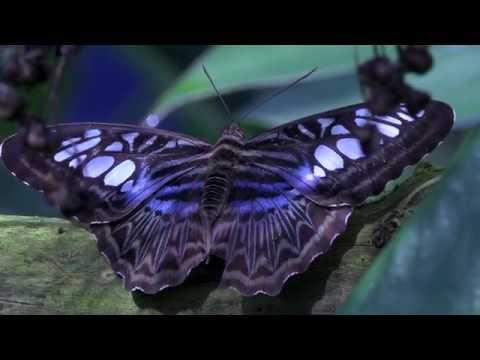 Schmetterlingsausstellung Botanischer Garten München 2014