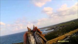 2015 KIBRIS CİKLA AVI HD 2.BÖLÜM- SONG THRUSH HUNT CYPRUS 2015 EPİSODE 2 - CACCİA ZORZALES TURDUS