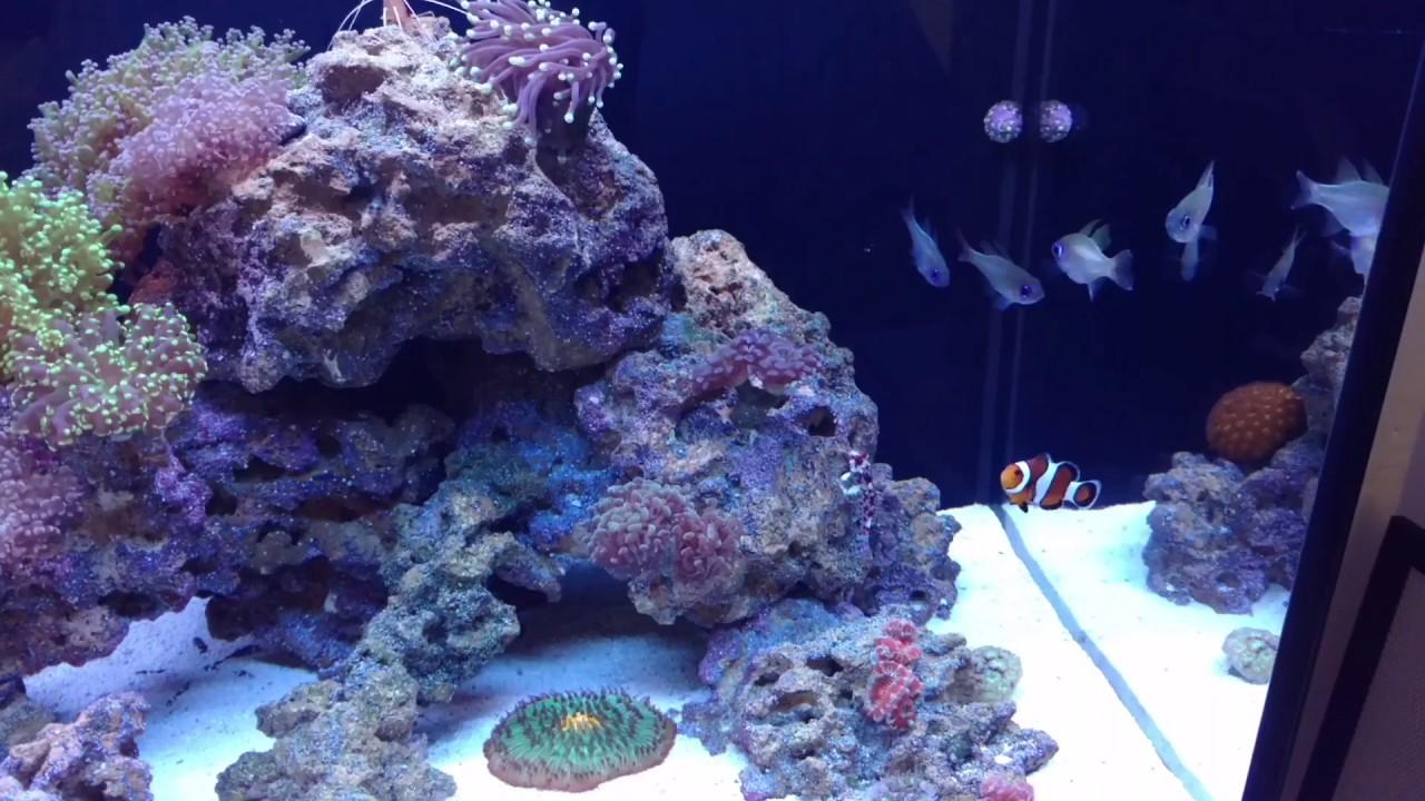 Can I Use Dead Coral In Freshwater Aquarium - Aquarium Views