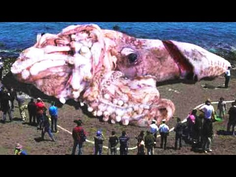 LARGEST Animals Ever Discovered!