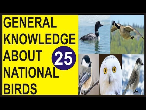 National Birds of the World | National Geographic Birds of the World | General Knowledge Quiz