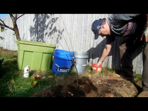 Planting a Chokecherry Tree