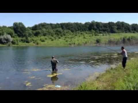лов толстолоба со дна снасти подводное видео
