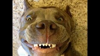 смешные собаки, funny dogs