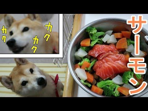 柴犬小春 震える旨さであごがカクカク!秋サーモンの刺身は無敵!ASMR、音フェチ、飯テロSalmon sashimi