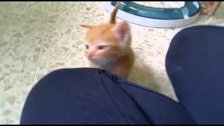 DAM: recuperado (gatitos de 20 días) con una gran infección --Arca Noé Córdoba