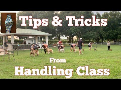 Dog Show - Tips & Tricks from Handling Class