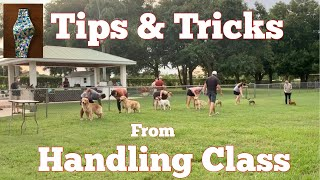Dog Show  Tips & Tricks from Handling Class