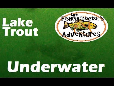 Best Underwater Lake Trout Luhr Jensen Lure Test