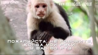 На языке животных #1