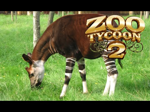 Zoo Tycoon 2: Okapi Exhibit Speed Build
