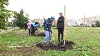 Высадка деревьев в ЗШК