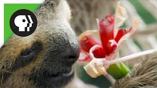 Baby Sloth Eating Flowers