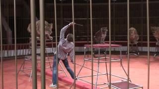 """Цирк - анонс программы """"Империя львиц"""" в Ростовском цирке"""