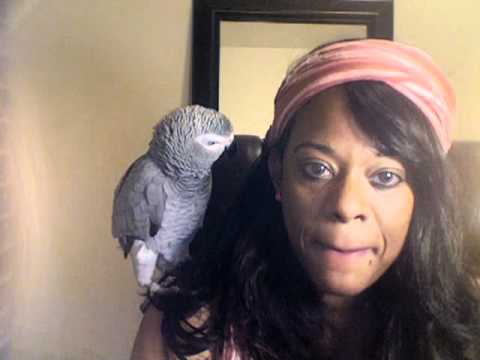 Common questions about African Grey Parrots. Staring My Parrot Cooper