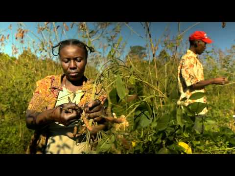 boosting-agriculture-in-haiti