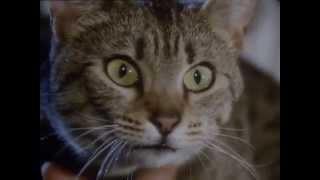 BBC Koshki 1 2002 XviD DVDRip