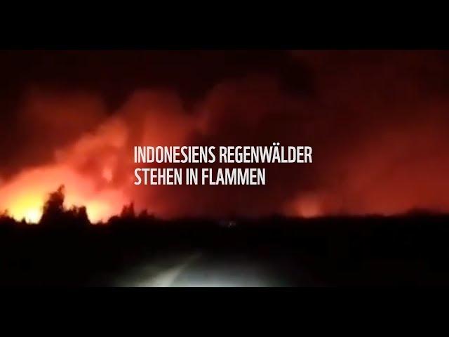 SOS: Waldbrände in Indonesien