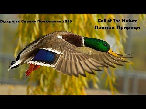 Відкриття по перу 2019 [ Незабутнє відкриття сезону ][ Охота на утку 2019 ] [ Duck Hunt ]