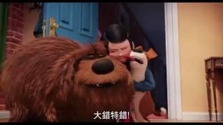 【寵物當家】汪星人篇-6月29日 歡樂登場
