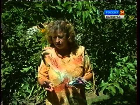 Осыпание плодов с деревьев. Биологические препараты для борьбы с вредителями.