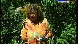 видео Наш сад.  Опадают плоды у яблони