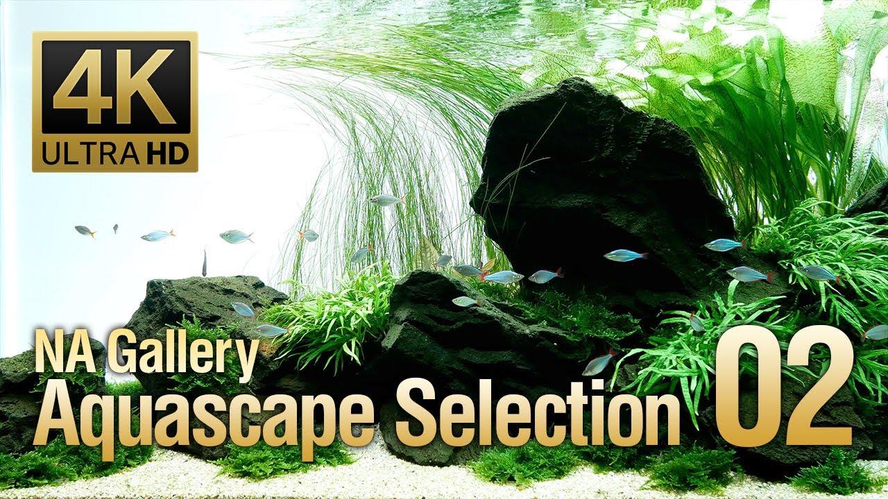 [ADAview] -4K- NA Gallery Aquascape Selection vol.2  ネイチャーアクアリウムギャラリー 水景セレクション2