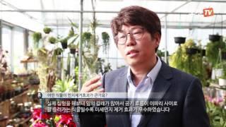 [노컷TV] 가습효과와 미세먼지 제거하는 실내식물